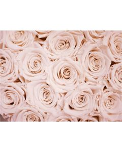 TfT - Greeting Card Pink Roses