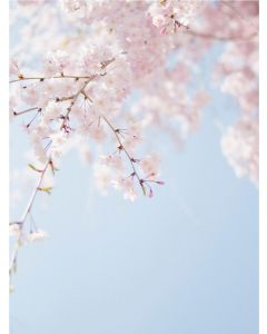 TfT - Greeting Card Blossom