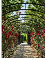 TfT - Greeting Card Garden