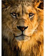 TfT - Greeting Card Lion